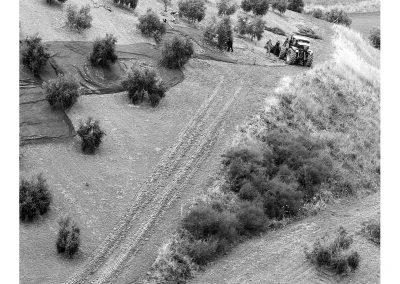 Vareando la oliva